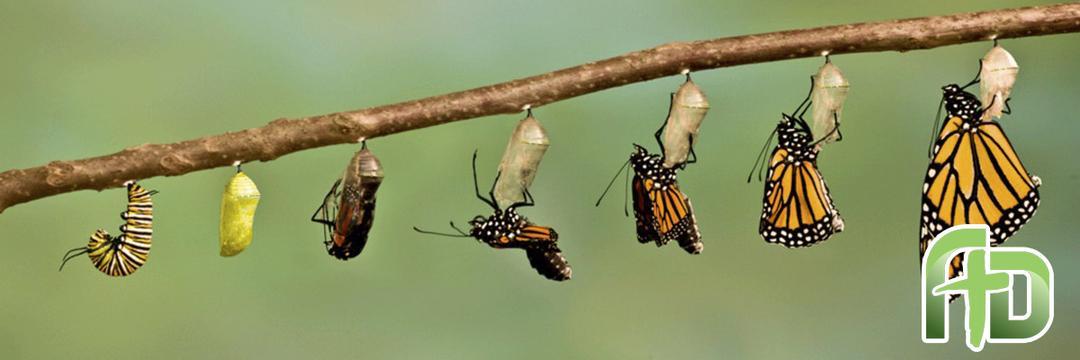 A Transformação da Mente que Promove Renovação